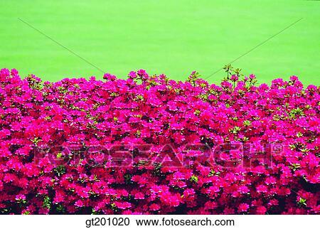 Banques de Photographies - jardin, ferme fleur, jardin fleur ...