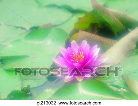 Stock Photo Of Pond Lotus Leaves Lotus Leaf Lotus Flower Marine