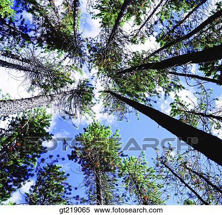 arbre ciel nuage nuages bas angle extrieur extrieur - Arbre Ciel