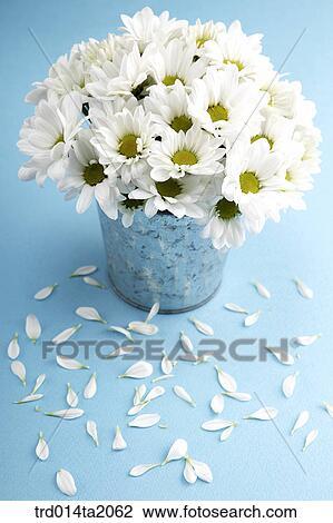 Stock Photo Of Chrysanthemum Flower Vase Decoration Petal Flower