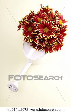 Stock Photo Of Chrysanthemum Flower Vase Decoration Flower Plant