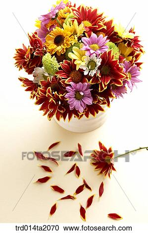 Stock Photography Of Chrysanthemum Flower Vase Decoration Petal