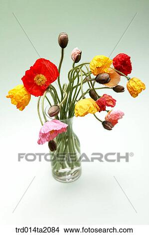 Stock Photo Of Poppy Flower Vase Decoration Flower Plant Indoor