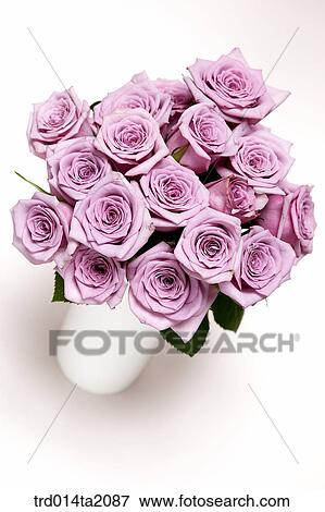 Picture Of Rose Rose Flower Plant Flower Vase Decoration Flower