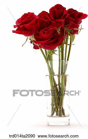Rose, rose flower, plant, flower vase, decoration, flower, plant Stock Image