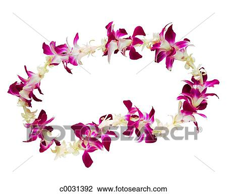 Stock photo of still life of a flower lei on a white background still life of a flower lei on a white background mightylinksfo