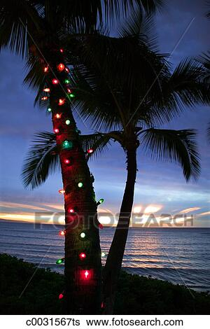 Christmas Lights In Palm Trees.Christmas Lights On Palm Tree Stock Photograph