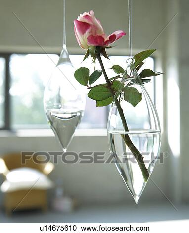 Stock Photography Of Hanging Glass Vase With Single Rose Blossom