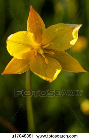 Unique Sauvage Jaune Colchique Contre Vert Et Fleur Jaune