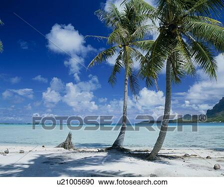 Beach Of Bora Bora Island Tahiti Stock Image