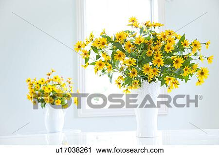 Stock Photography Of Cucumber Leaf Sunflowers Helianthus