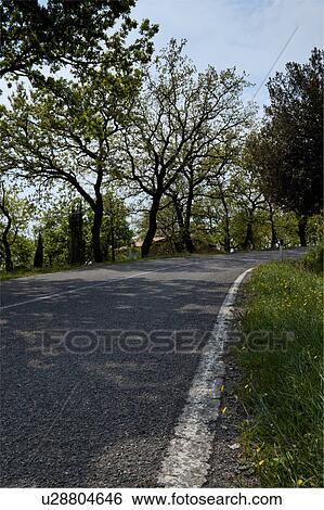 Fiori Gialli Bordo Strada.Albero Erba E Fiori Gialli Lungo Curvatura Bordo Della