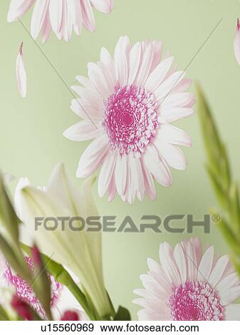 stock photograph of flowery wallpaper u15560969 search stock