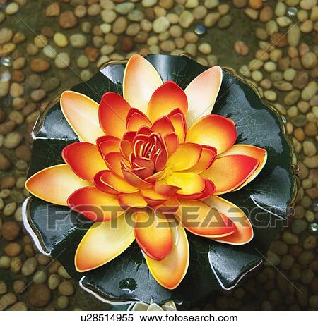 Stock image of high angle view of a lotus flower tirupati andhra high angle view of a lotus flower tirupati andhra pradesh india mightylinksfo