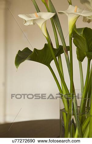 Stock Photography Of Detail Calla Lilies In Vase Carpinteria