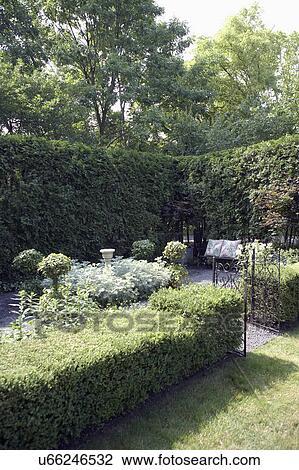 Stock Foto Garden Ecke Von Kleingarten Mit Arborvitae Hecke