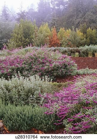 Stock Foto Kraut Arbeitet Garten Boden Von Greystone