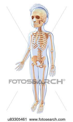 Clipart of Human skeletal system, artwork u83305461 - Search Clip ...