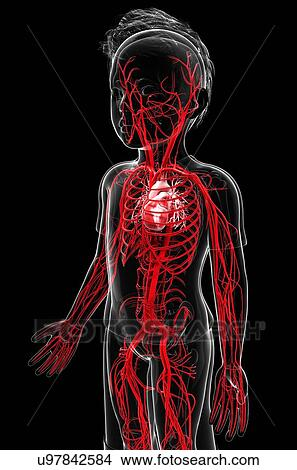 Drawings of Human vascular system, artwork u97842584 - Search Clip ...