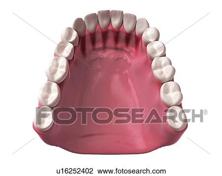 Clip Art - dientes humanos, ilustración u16252402 - Buscar Clip Art ...