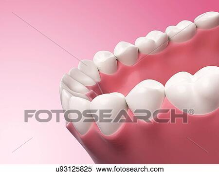 Colección de ilustraciones - dientes humanos, ilustración u93125825 ...