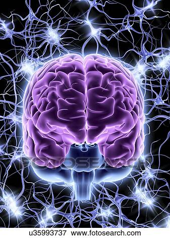 Stock Illustration of Brain and nerve cells, neural network ...
