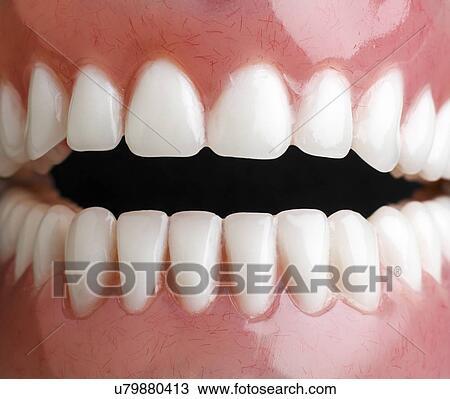 Dibujo - modelo, de, dientes humanos, cierre, arriba. u79880413 ...