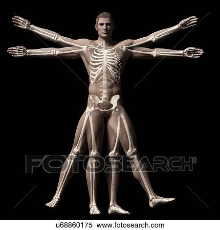 Coleccin de ilustraciones vitruvian hombre esqueleto