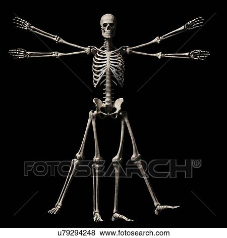 Stock Illustration Of Vitruvian Man Skeleton Illustration