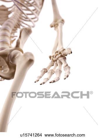 Stock Foto - menschliche hand, nerven u15741264 - Suche Stockbilder ...