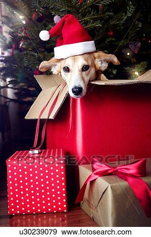 e43ad30616ad6 Stock Photograph of Dog in box