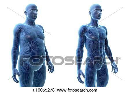 Comparison Of A Fit And Obese Male Computer Illustration Stock Photo U16055278 Fotosearch
