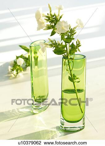 Stock Foto Grün Glas Vasen Mit Phlox U10379062 Suche