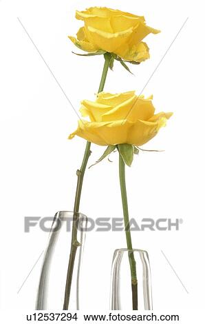 Stock Photo Of Two Yellow Roses In Glas Vases U12537294 Search