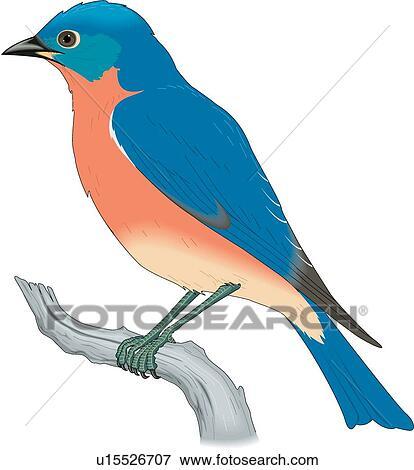 clip art of bluebird u15526707 search clipart illustration rh fotosearch com bluebird clipart images bluebird clipart free