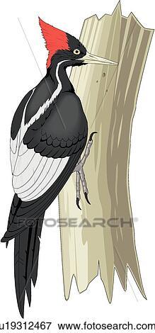 clip art of ivory billed woodpecker u19312467 search clipart rh fotosearch com woody woodpecker clipart pileated woodpecker clipart