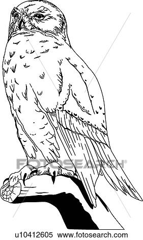 clipart of snowy owl u10412605 search clip art illustration