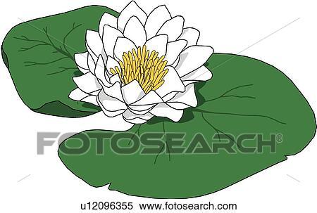 Clipart n nuphar u12096355 recherchez des clip arts des illustrations des dessins et des - Nenuphar dessin ...