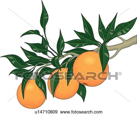 Orange Tree Limb Clip Art U14710809 Fotosearch
