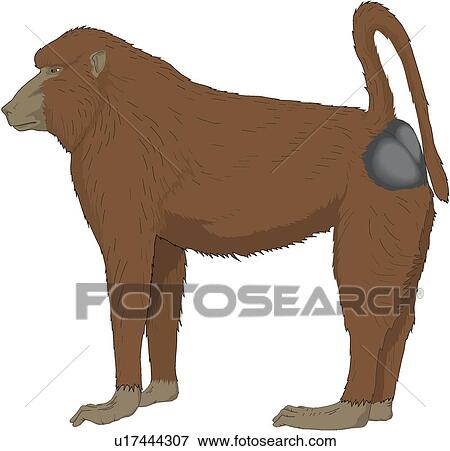 clip art of baboon u17444307 search clipart illustration posters rh fotosearch com baboon clipart free Kangaroo Clip Art