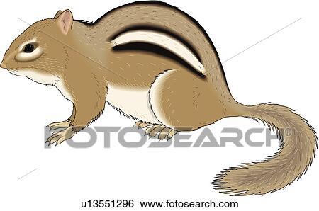 clip art of chipmunk u13551296 search clipart illustration rh fotosearch com Chipmunk Clip Art Black and White chipmunk clipart black and white