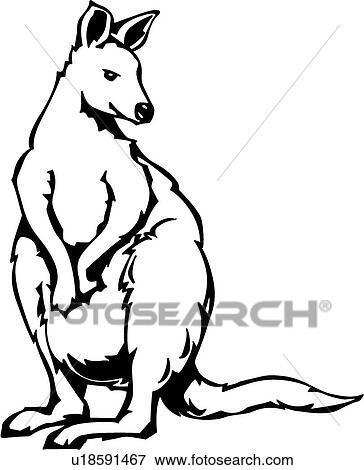 Clip Art Of Kangaroo U18591467