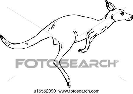 Clipart Of Kangaroo U15552090