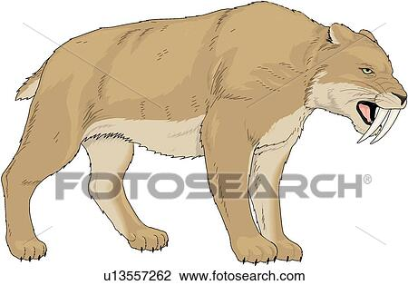 Tigre Dente Sciabola Clipart U13557262 Fotosearch