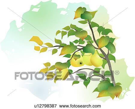 Clipart arbres arbre usines fruit chinois coing arbre plante u12798387 recherchez des - Dessin arbre chinois ...