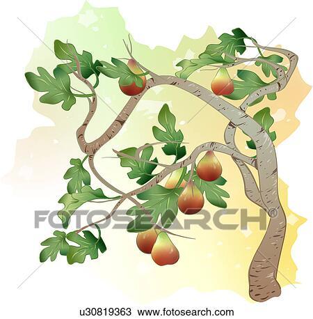 Clipart piante albero fico frutta albero fico for Albero fico prezzo