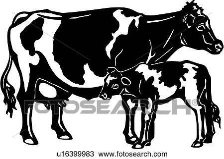 Animal Breeds Calf Cattle Cow Farm Holstein Livestock