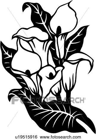 clip art cala lilie calla blume lilie varieties u19515916 suche clipart poster. Black Bedroom Furniture Sets. Home Design Ideas