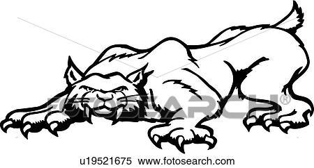 clipart animal bobcat desenhos animados gato fang felino