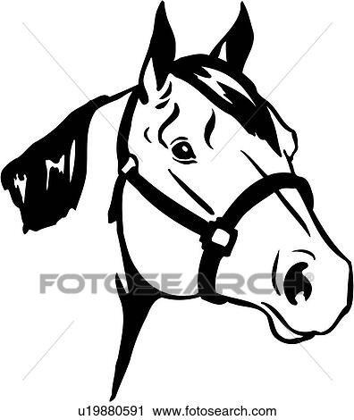 clipart of animal breeds horse quarter horse head u19880591 rh fotosearch com horse head clipart black and white horse head clipart outline